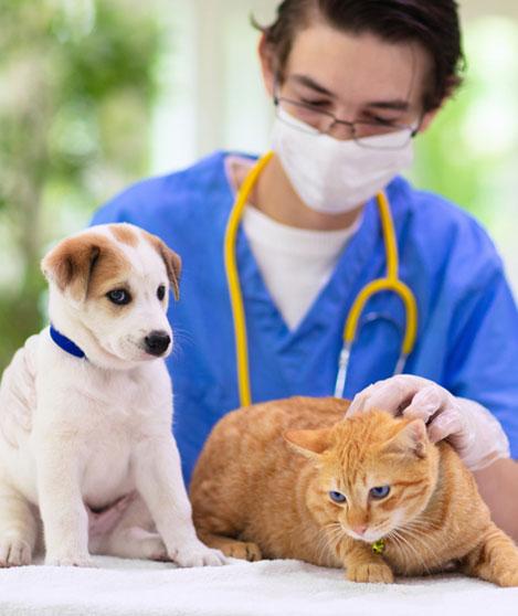 L'assurance santé pour animaux